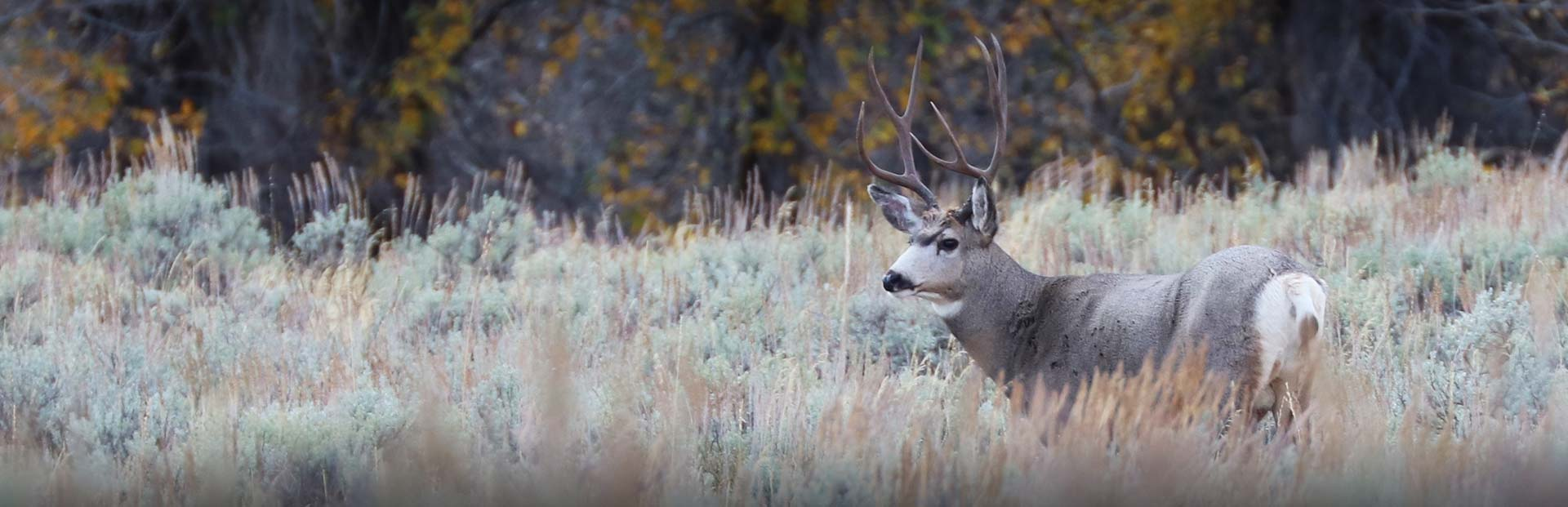South Dakota Mule Deer Hunts
