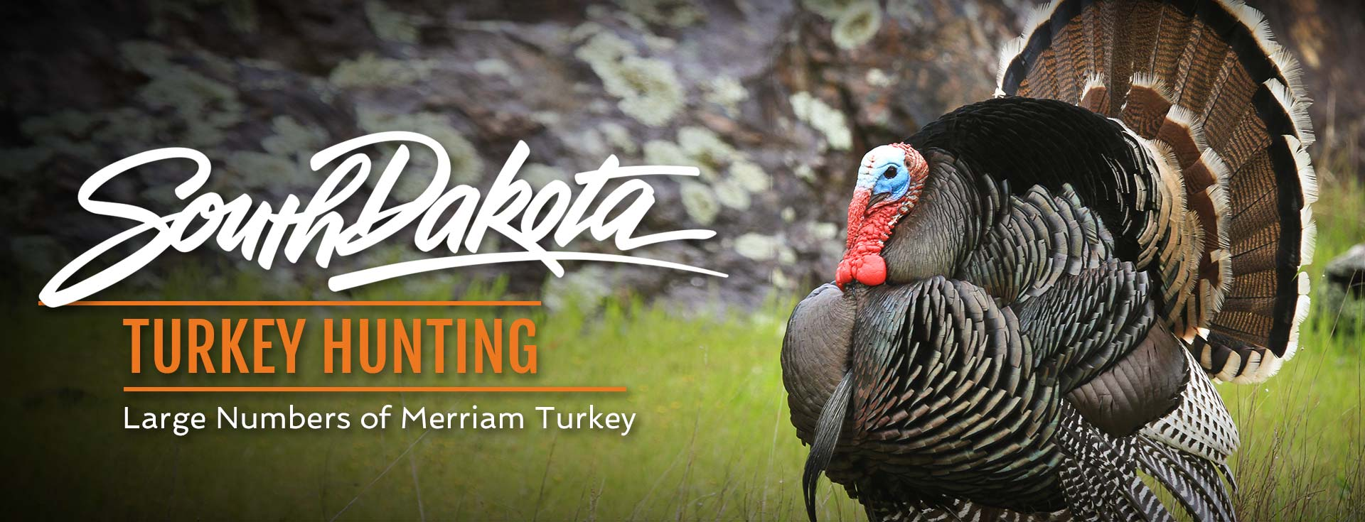 South Dakota Turkey Hunting